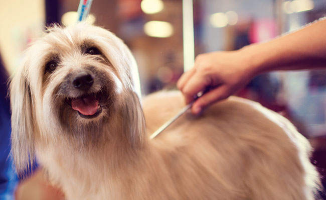 best houston dog grooming