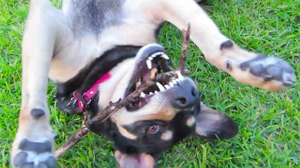 kennel-free dog boarding 77018
