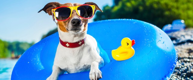 summer health advice for dogs