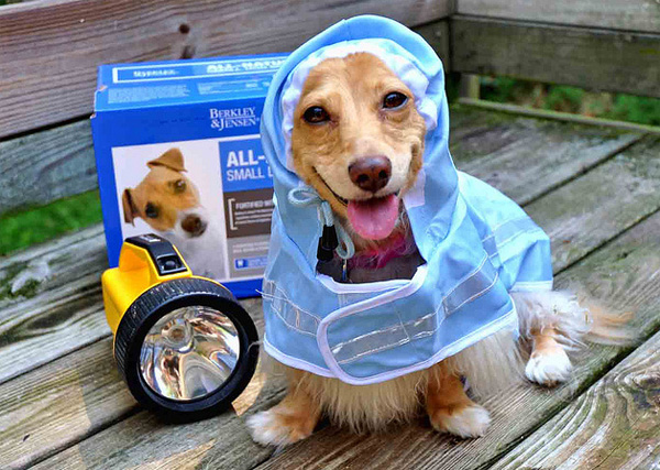 hurricane preparation for dogs