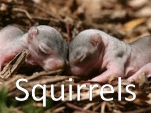 An image of two baby squirrels