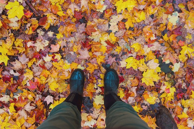 Boots standing on fallen autumn foliage. The leaves are coloured red, yellow and orange