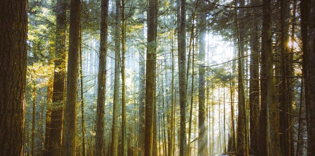 Beams of sunlight shine through a temperate rainforest. Scenes like this help alleviate stress and promote well-being.