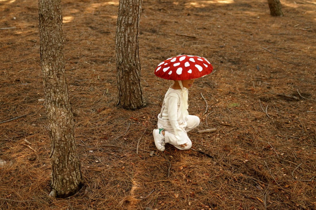 Toad Stool Fly Agaric Mushroom Red Hat With White Dots Adult One Size Accessory