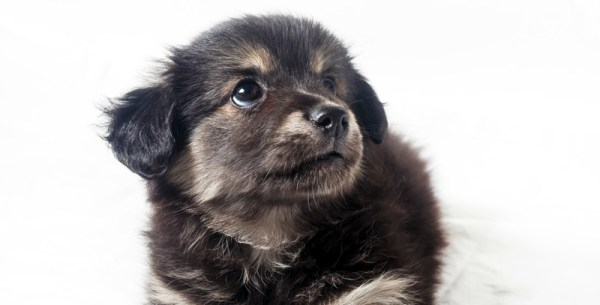 Parents of adorable puppies should get advice from Dr. Allyson
