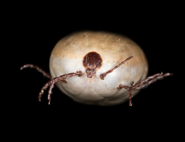 Lyme Disease should be taken seriously in our pets