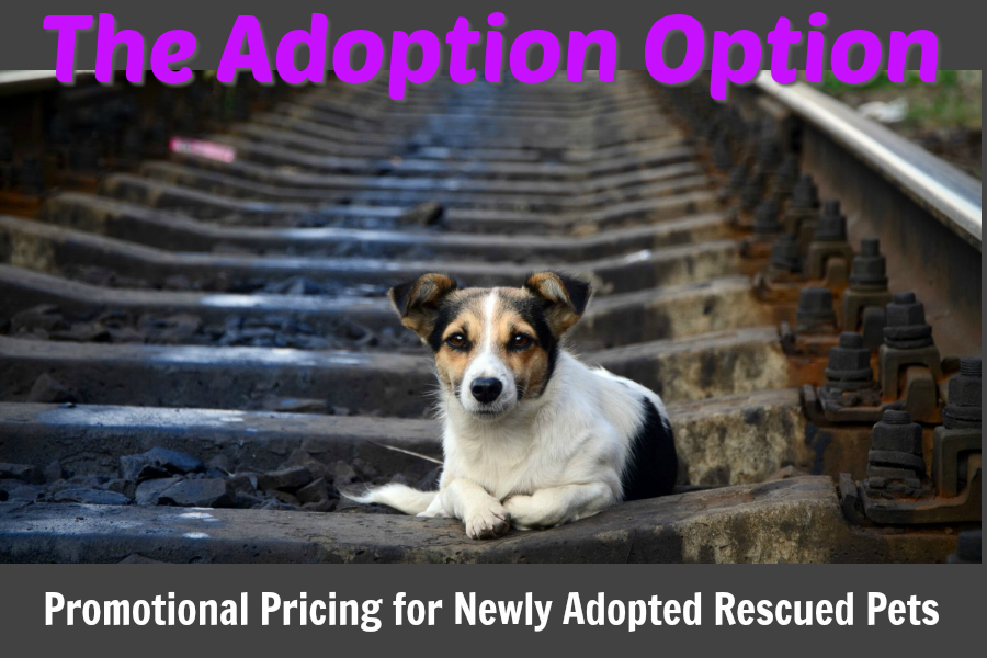 Adoption Option Promotional Pricing at Woodlawn