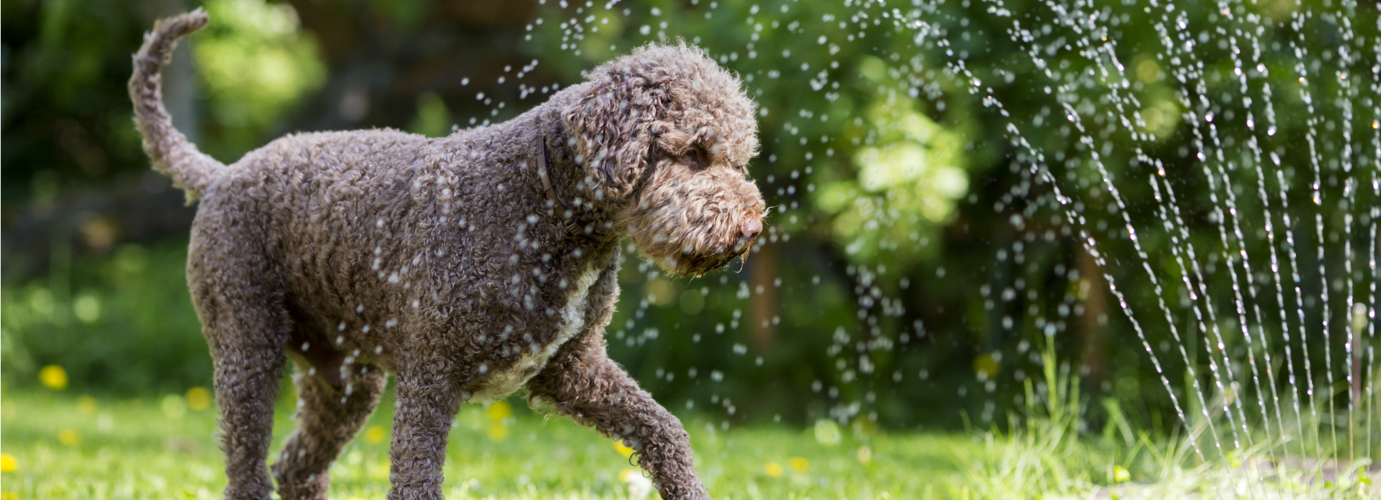 You'll understand your pet's care at Woodlawn Animal Hospital