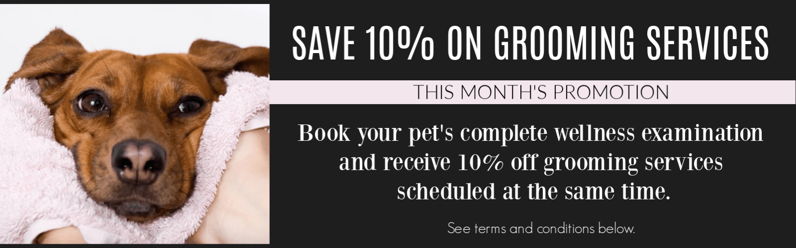 Woodlawn November promotion on pet grooming
