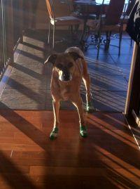 NonSlip Dog Socks for Senior Dog