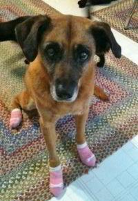 Power Paws for a Three-Legged Dog