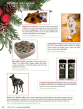 american-dog-mag-holiday-guide