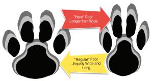 foot-shapes