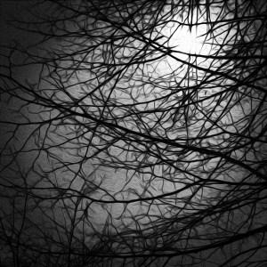 tree in moonlight