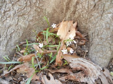 Tiny flowers call this root nook home