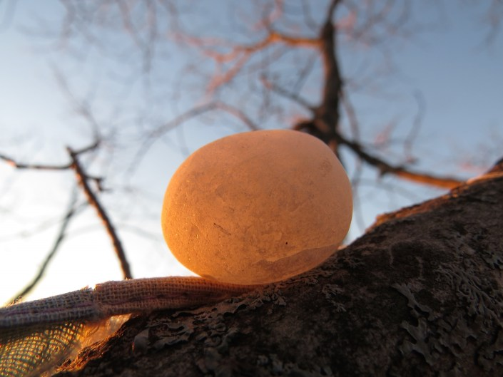 Pebble in tree at sunset
