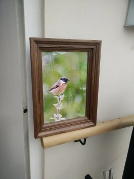 Picture frame by squashynipple