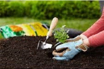 Potting Soils Reviews