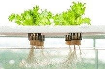 What is Hydroponics