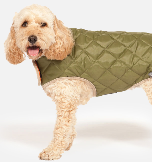 Olive Green Quilted Dog Coat