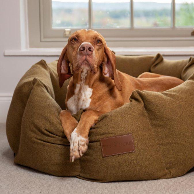 Donut Dog Bed Tweed