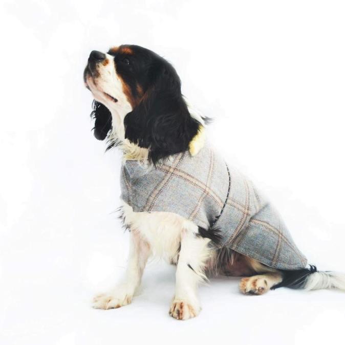 Tweed Darcy Dog Coat