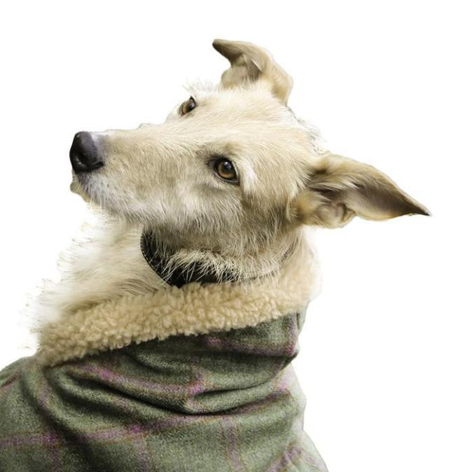 Tweed Estate Dog Coat With Sherpa Collar (Sightsounds) - Raspberry