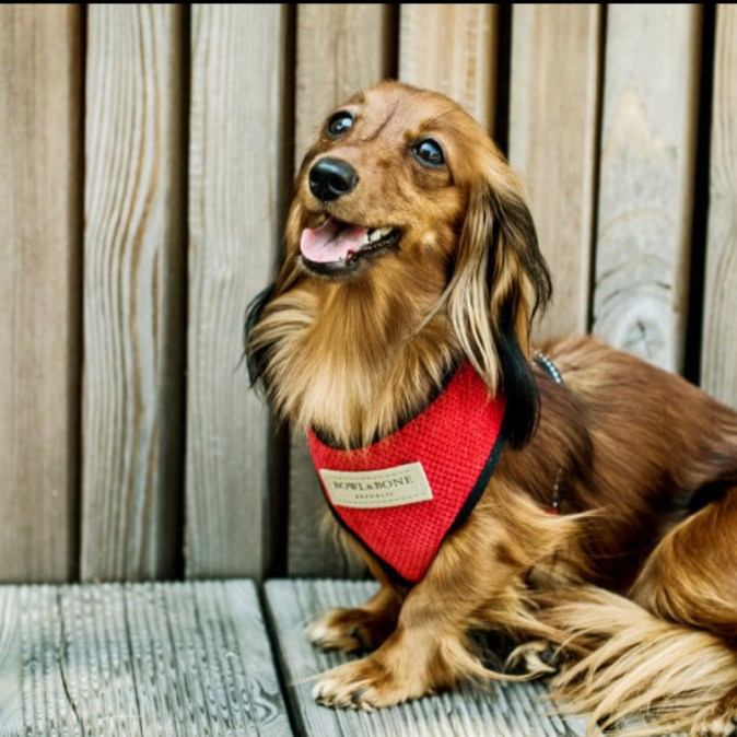 Red Dog Harness Candy