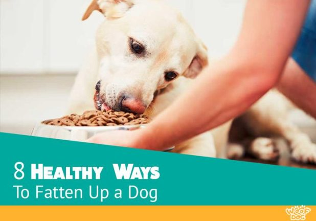 How To Make Your Dog Gain Weight Fast