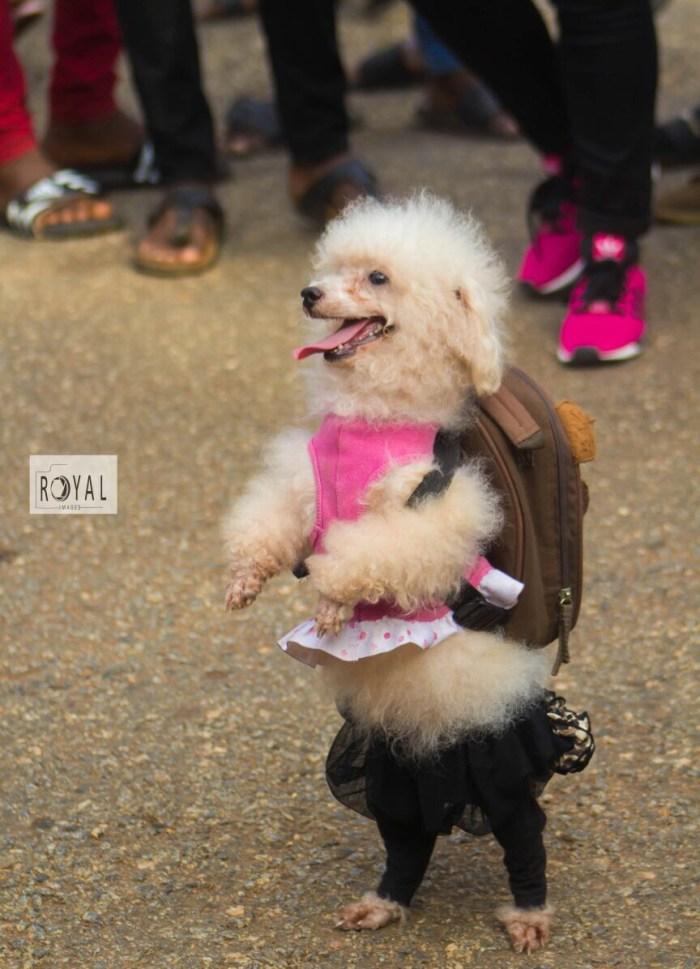 Pent Dog Show 2017 Ghana 5