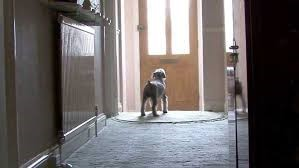 Five practical training hacks to control negative dog behavior - Barking