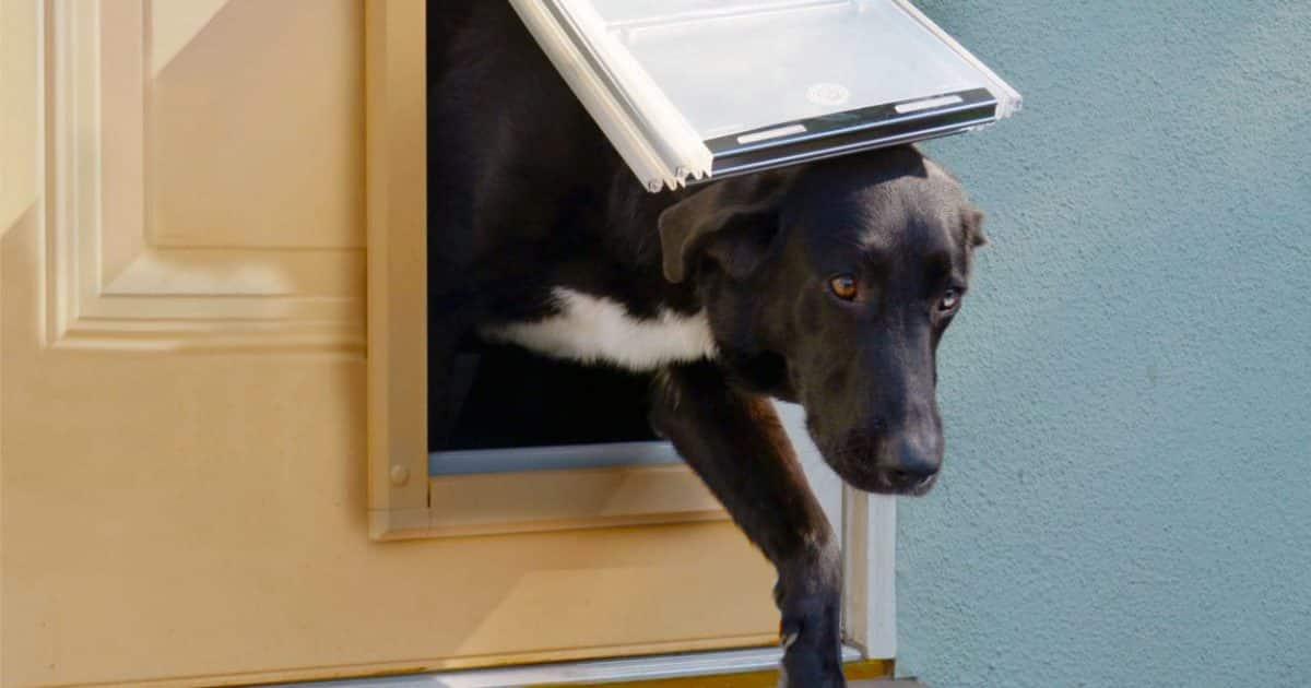 dog supplies pet flap door
