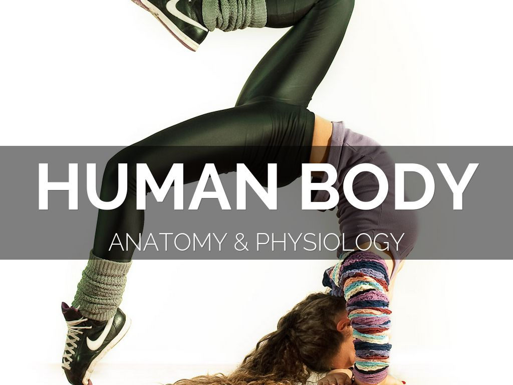 The Human Body Muscles And Bones Clil To Teach Is To