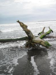 Loved this driftwood tree.