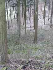 winter2013_009