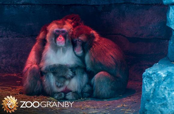 Noctambule au Zoo de Granby / wooloo