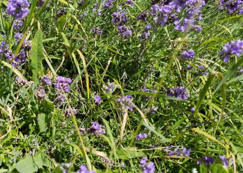 sécher ses fines herbes wooloo