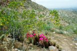 More creosote and cactus