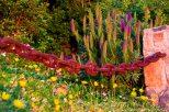 Zapallar Flowers 19