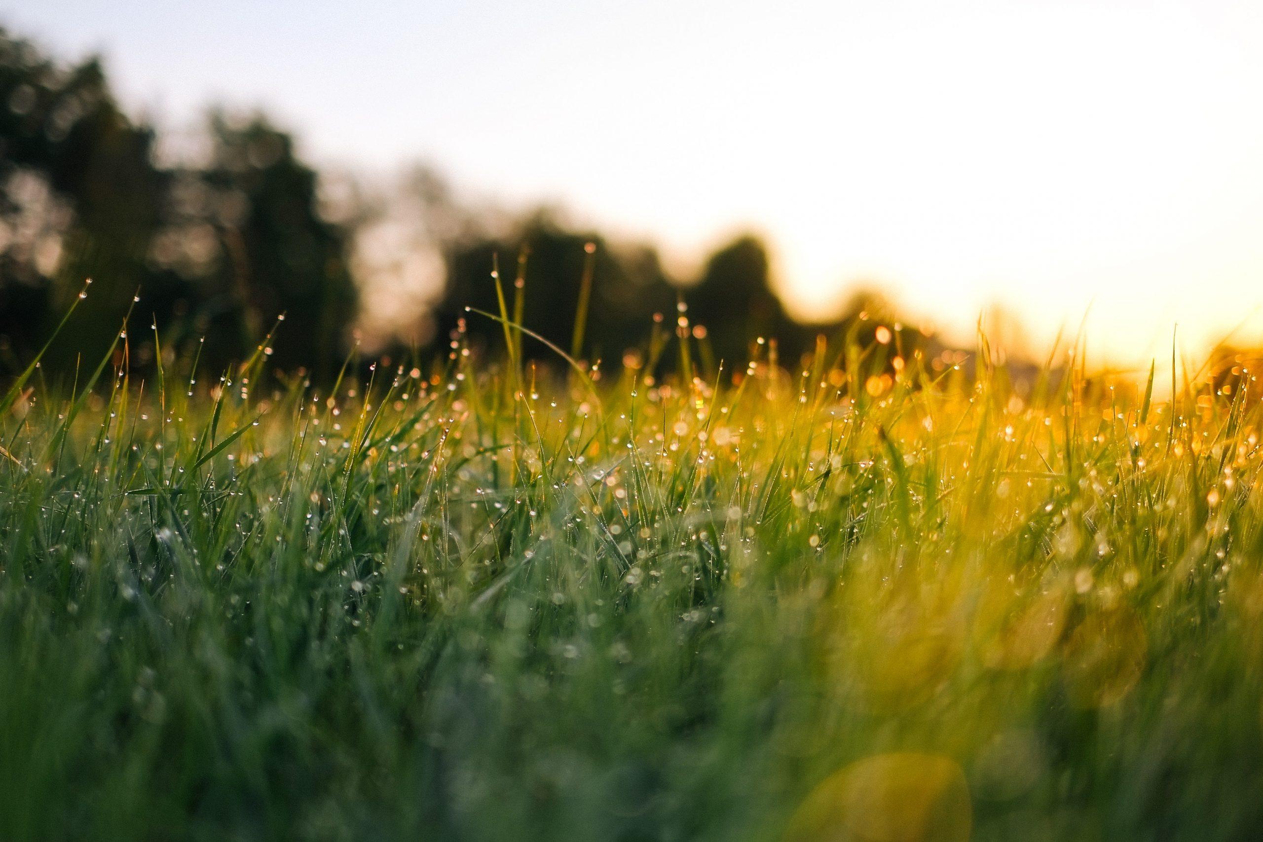 Gras inzaaien: hier houd je rekening mee