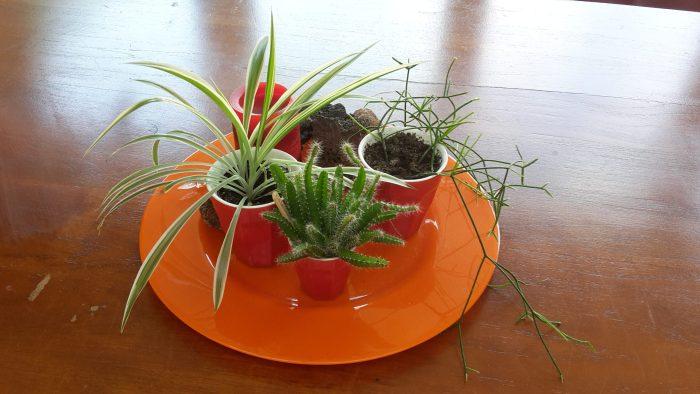 botanisch interieur