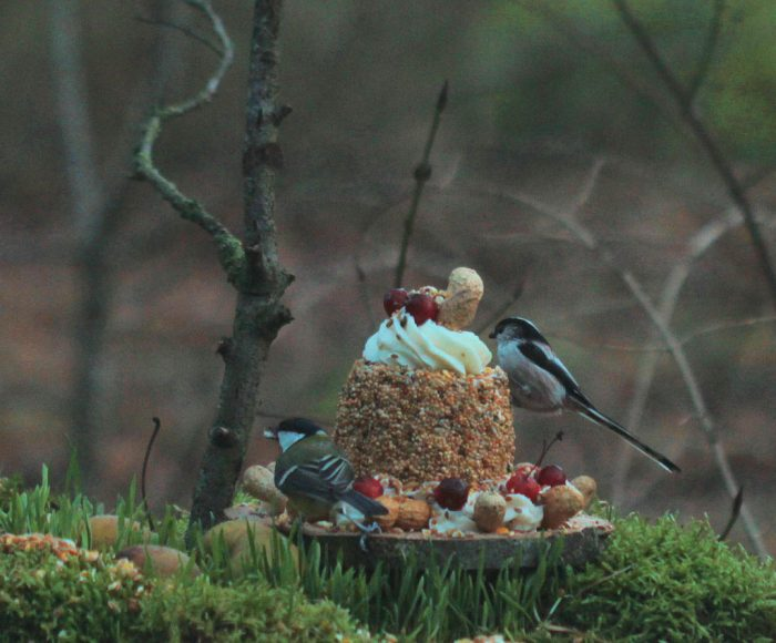 voedsel taart voor vogels