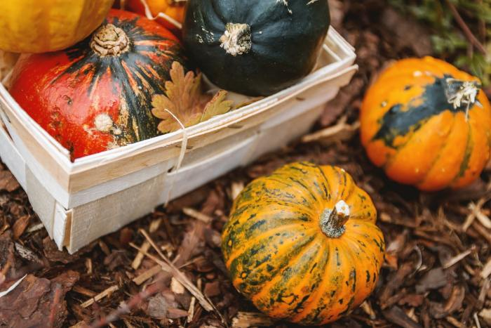 herfststukje maken met pompoenen