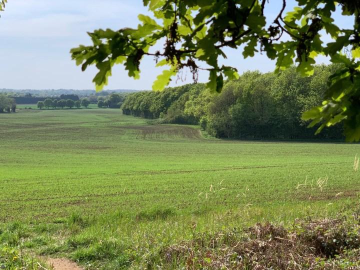 wootton parish lincombe path 6 w
