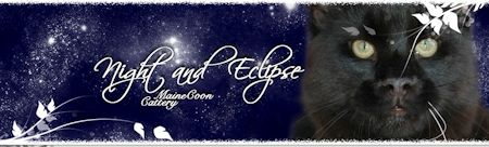 banner_night_eclipse
