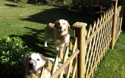 Dog friendly garden ideas using fencing
