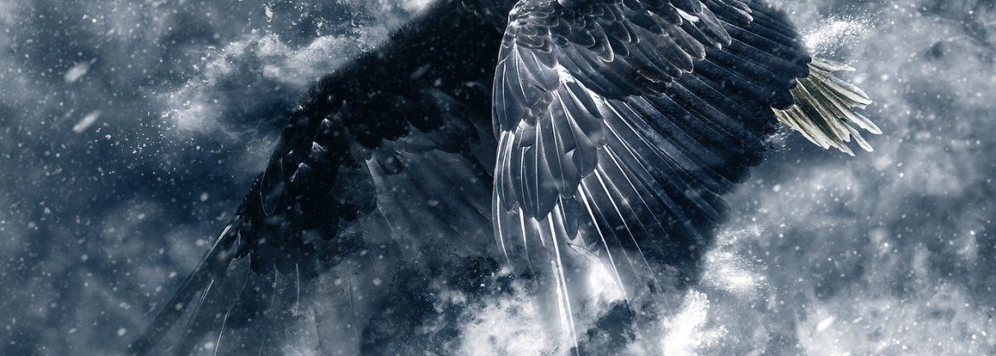 eagle, snow, wings