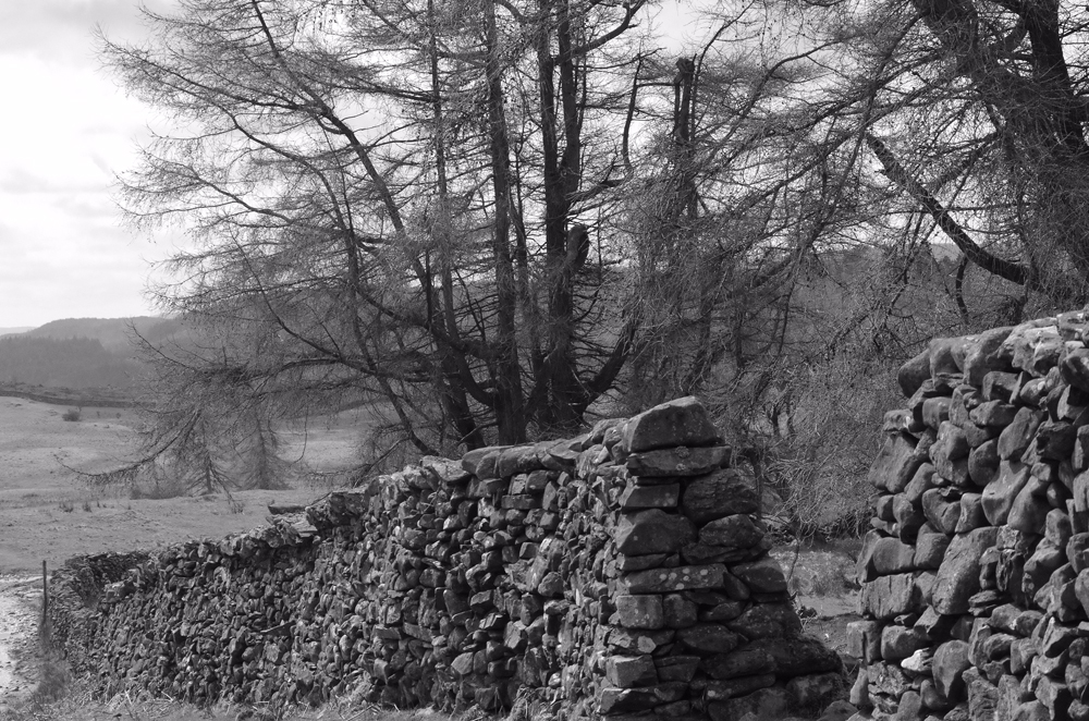 Black and white photo of a stone wall