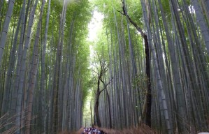 Bamboo forest FB5