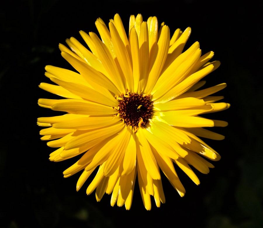 Bill Williams flower